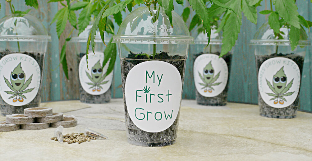 Teach Your Kids About Hemp with My First Grow Kit