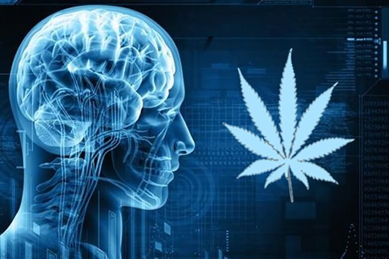 How Cannabis Can Affect Your Health