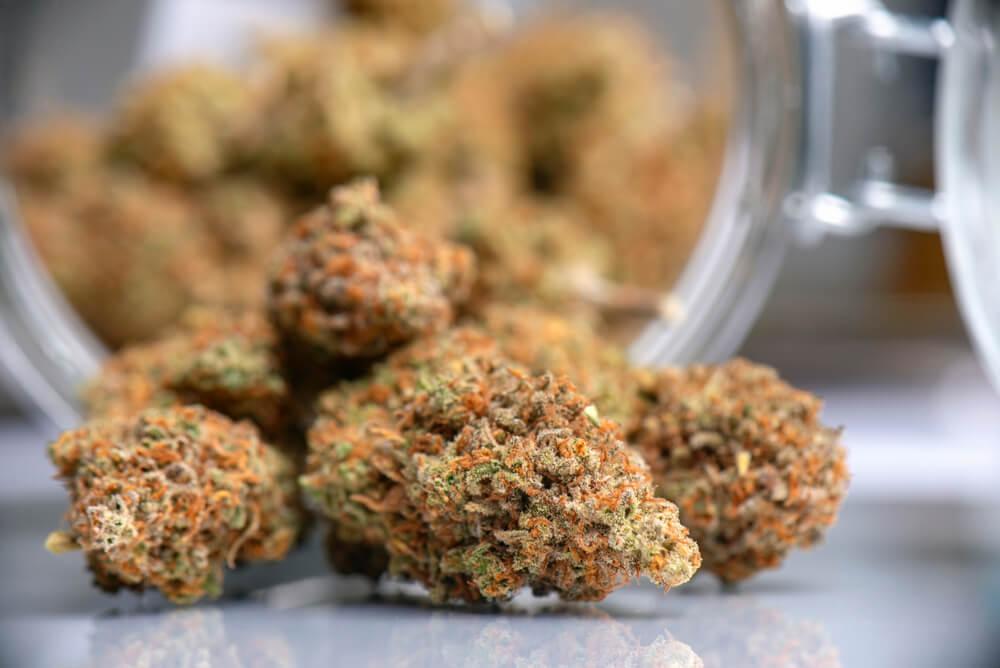 Keep Cannabis Away From Light
