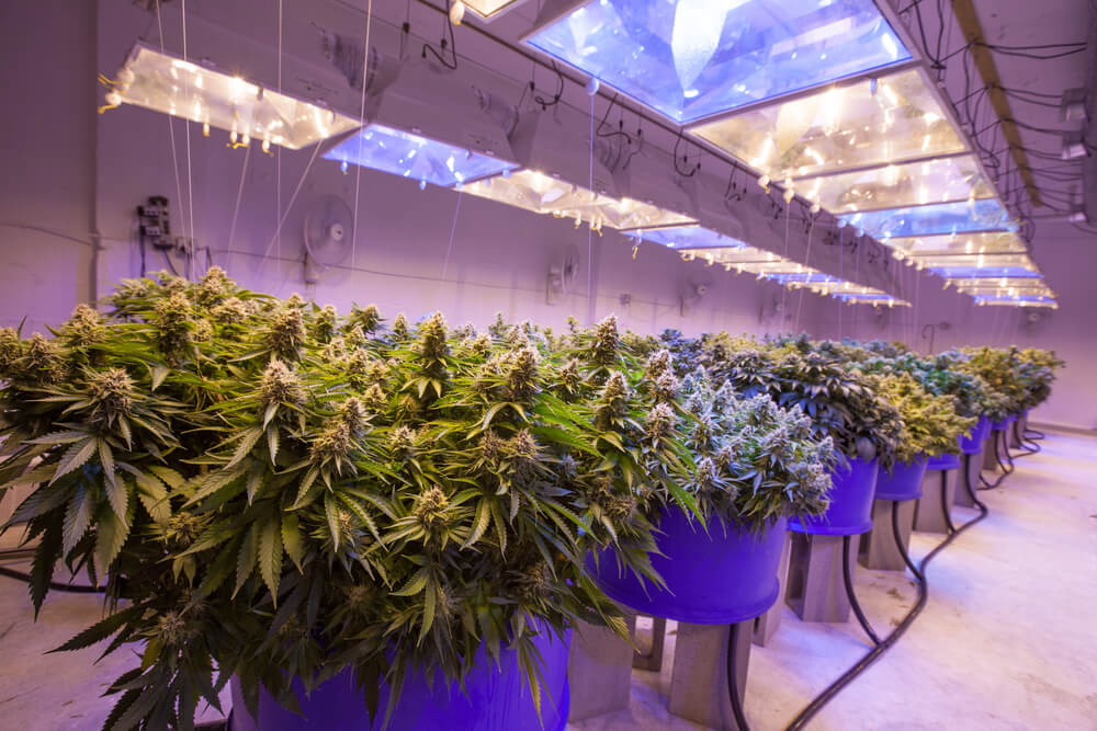 Here Are the Best Indoor Growing Systems