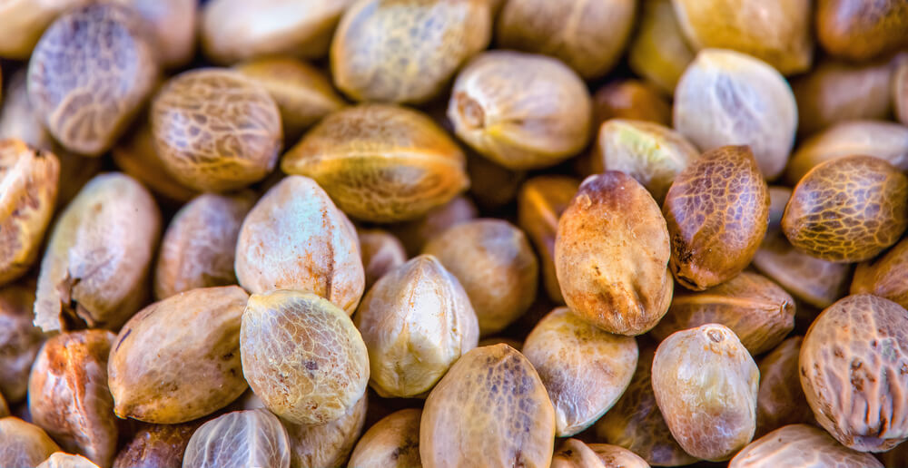 Top 4 Best Seed Banks That Ship to the US
