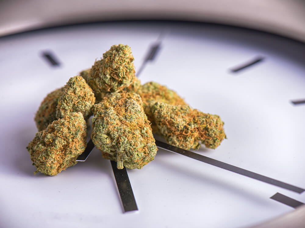 Cannabis Tolerance - Timing