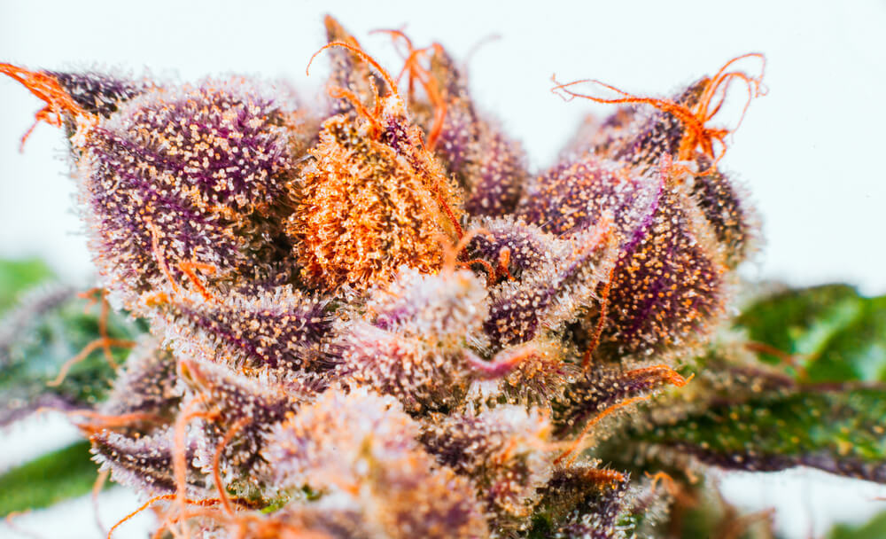 A Guide To Cannabinoids
