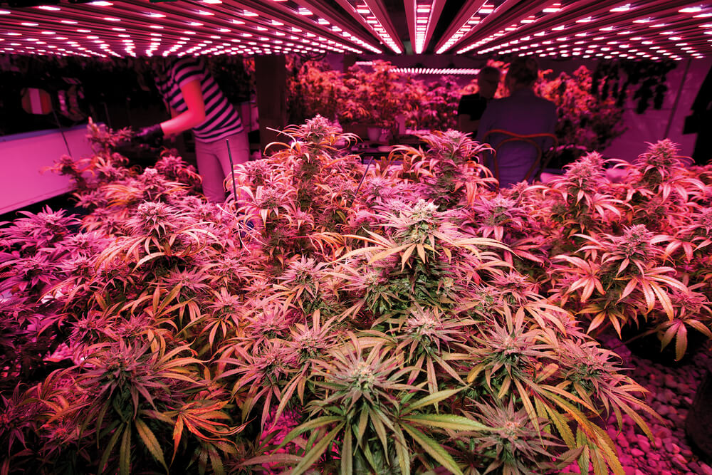 Indoor Marijuana Growing Supplies List
