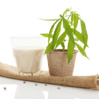 How to Make Cannabis Milk Recipe