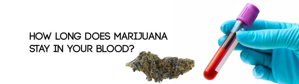 How Long Does Marijuana Stay In Your Blood