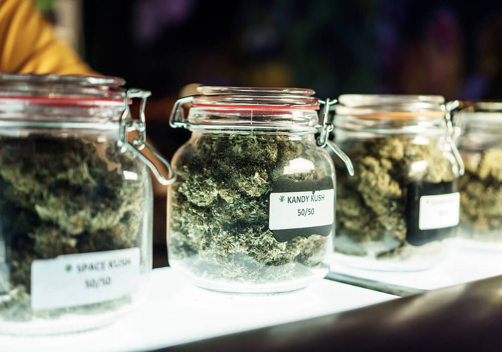 """Toronto Company Will Pay """"Cannabis Connoisseurs"""" $50 an Hour to Sample Different Weed Strains"""
