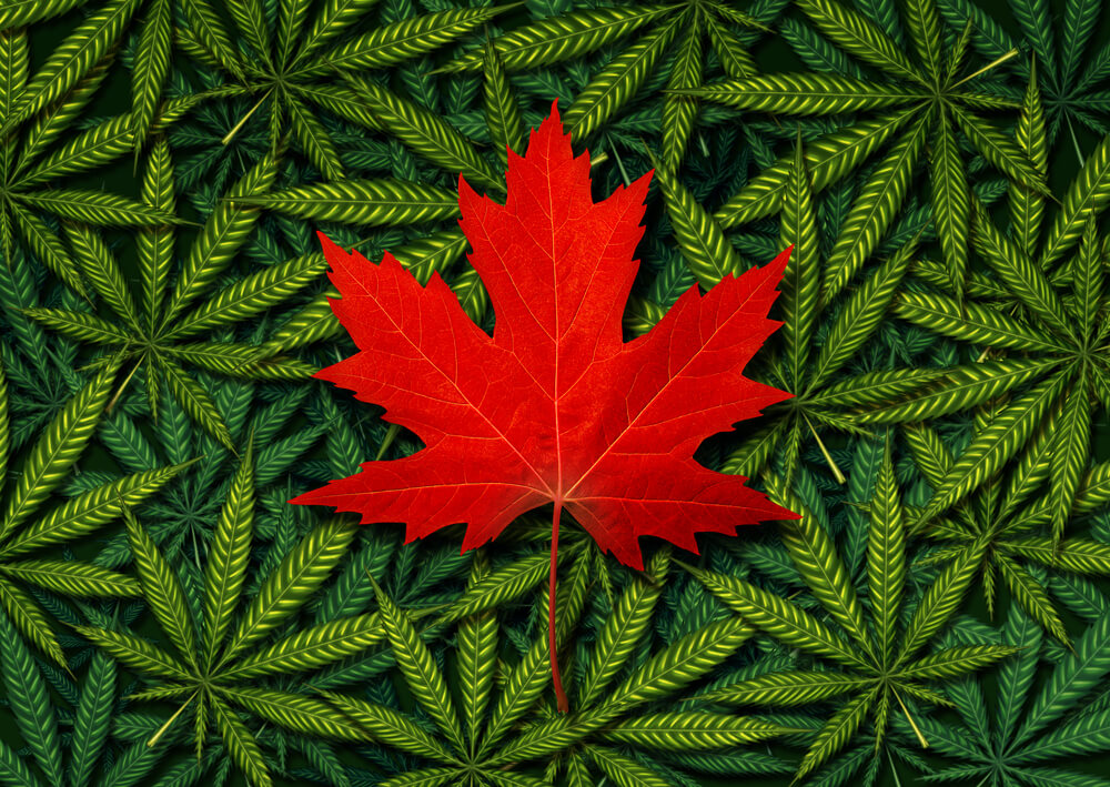 Cannabis in Canada: The Skinny on Laws and Regulations