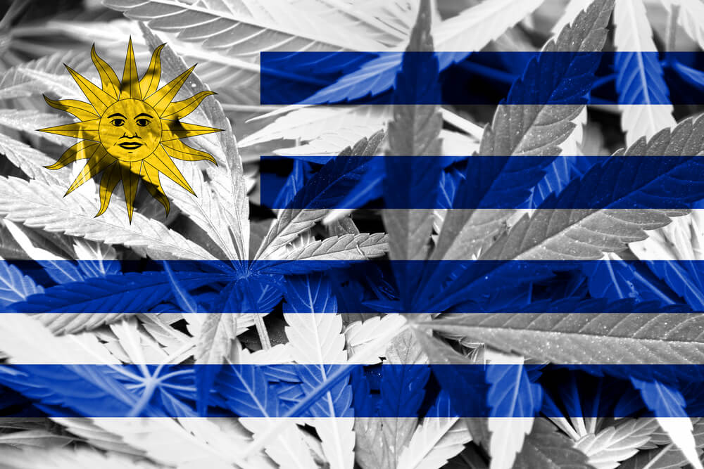 Legal Cannabis Marketing in Uruguay