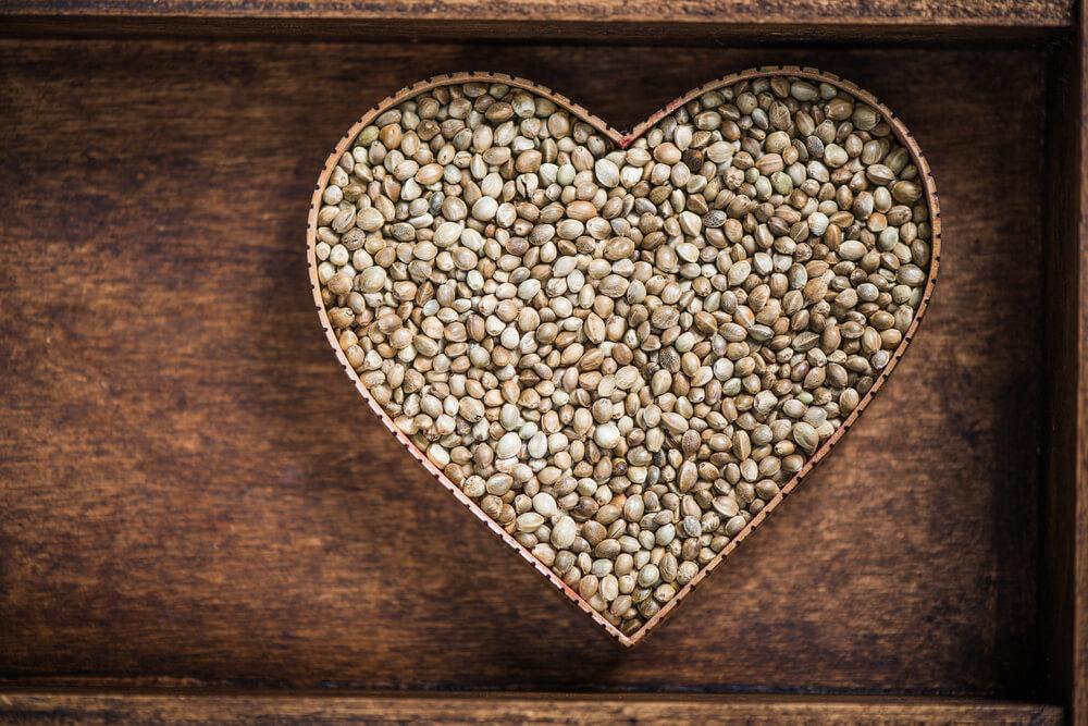 Hemp Seeds Could Improve Heart Health