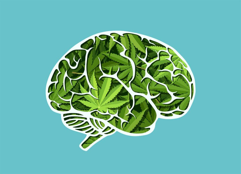 Cannabis Kills Brain Cells