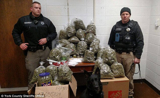 Elderly Couple With 60 Pounds of Cannabis Say They Were Giving It As Christmas Gifts