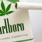 Marlboro Cannabis Investment