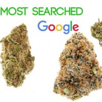 Most Searched Weed Strains