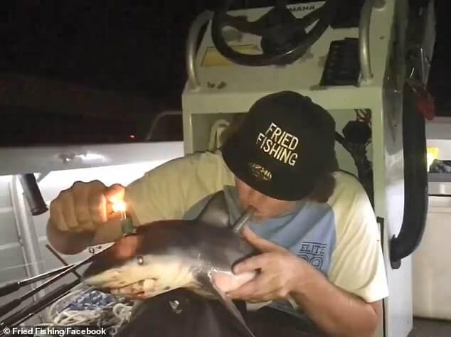 Australian Fisherman Uses Dead Shark As A Bong