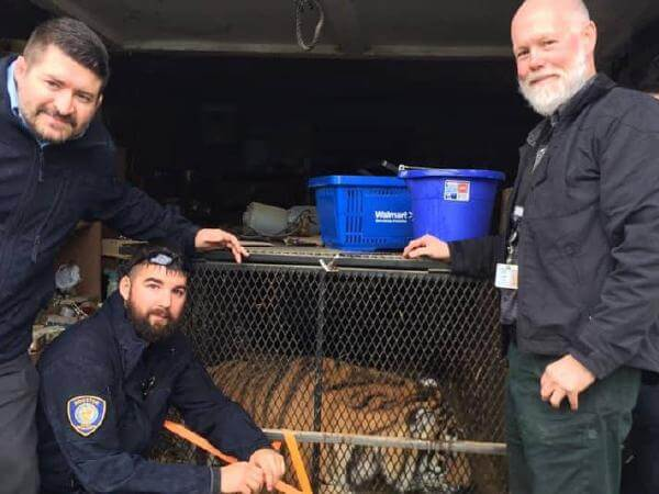 Texas Man Enters Abandoned Home To Smoke Weed, Finds Tiger Instead