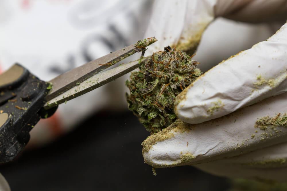 Cannabis Quality Control