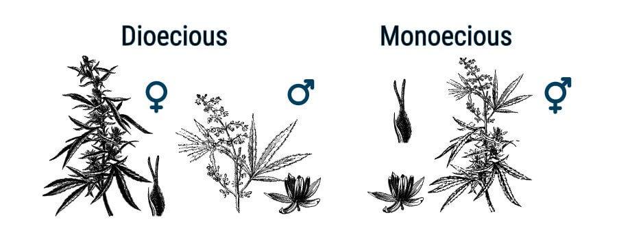 Dioecious and Monoecious