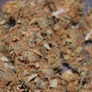 what-is-reggie-weed