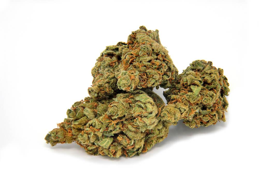 Moisture Cannabis