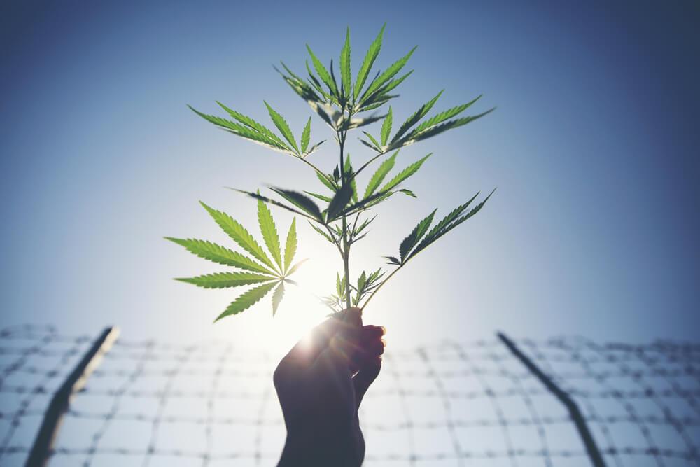 Dubai Frees Briton Caught With 0.003 Grams Of Cannabis