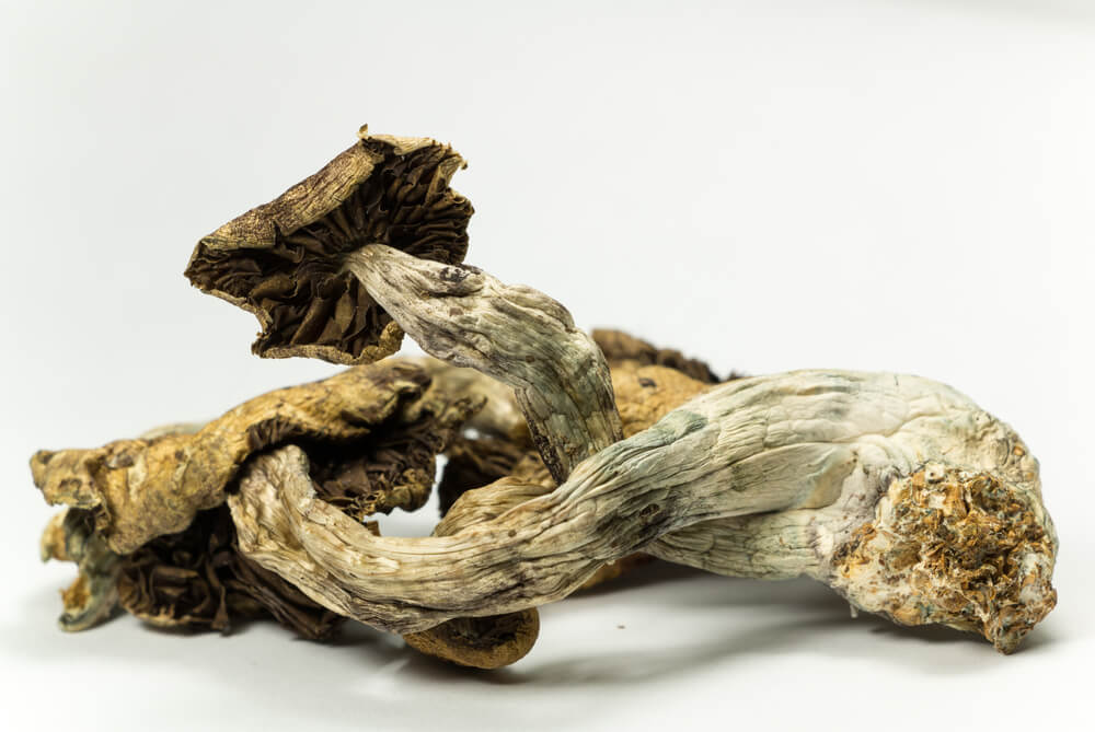 Voters In Denver Approve Decriminalization Of Magic Mushrooms