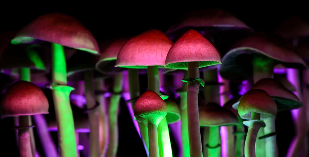 Oakland Becomes Second US City to Decriminalize Magic Mushrooms