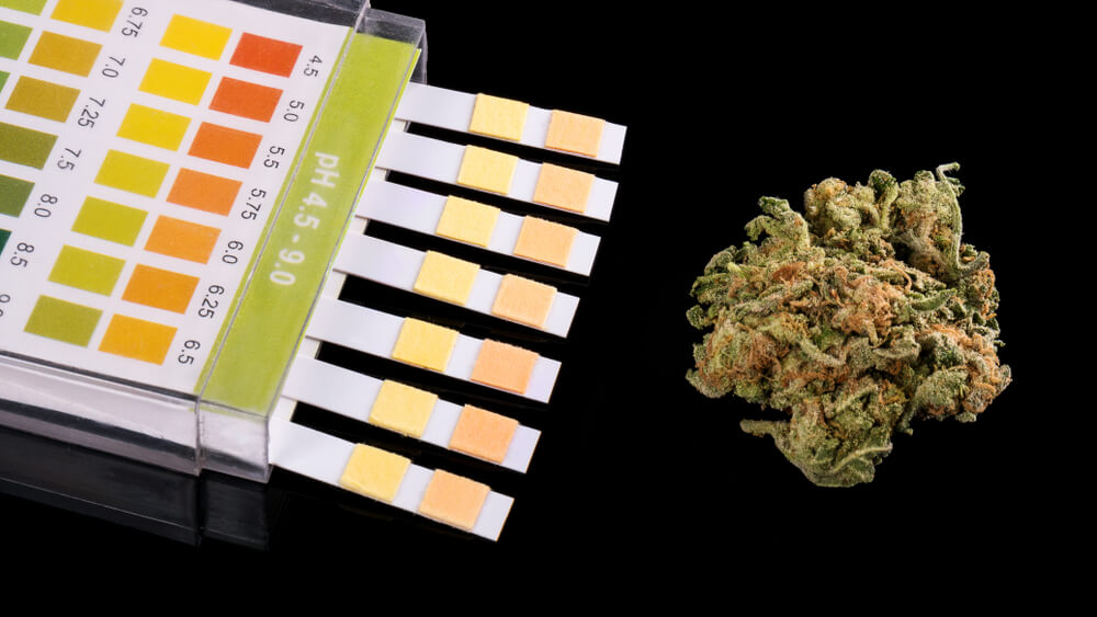 Nevada Becomes First State To Prohibit Pre-Employment Cannabis Tests
