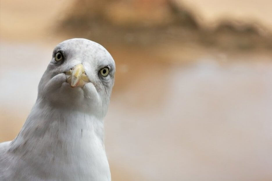 Man Avoids Police Arrest After Seagull Flies Off With His Bag Of Weed