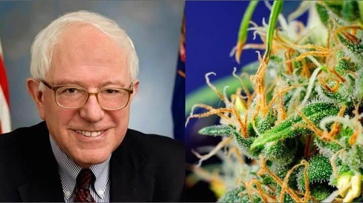 "Bernie Sanders: ""I Will Legalize Cannabis Through Executive Order"""