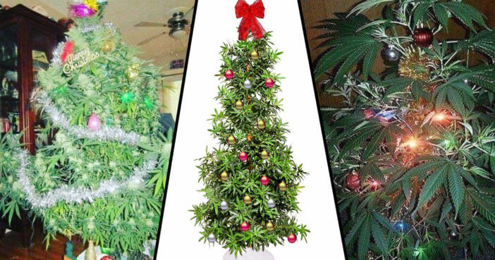 Green Up Your Christmas With a Weedmas Tree
