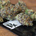 medical marijuana free sicily