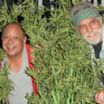 seniors cannabis