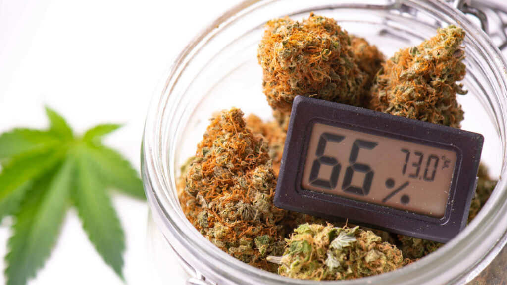 cannabis buds on clear glass jar with humidity gauge