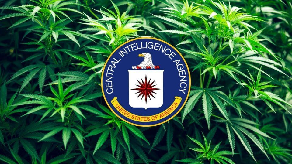 CIA Says People Who Use Cannabis Aren't Necessarily 'Bad' Or 'Unworthy'