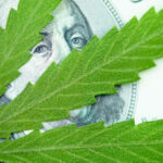 A cannabis leaf over a $100 bill