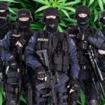 A SWAT team against a backdrop of cannabis leaves
