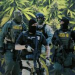 DEA agents against a backdrop of cannabis leafs