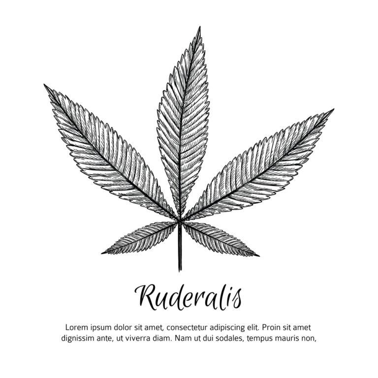 Ruderalis Weed