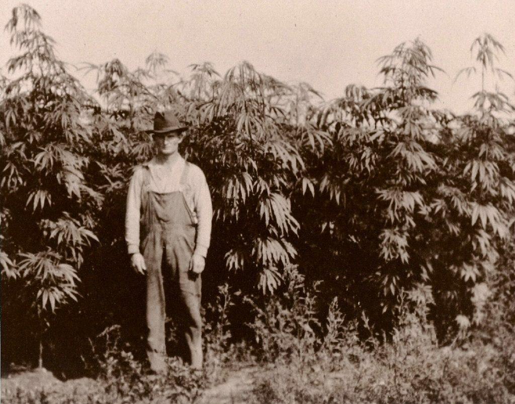 Old timely Hemp Farmer