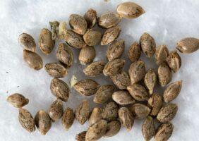 Seed Germination - Growing Season